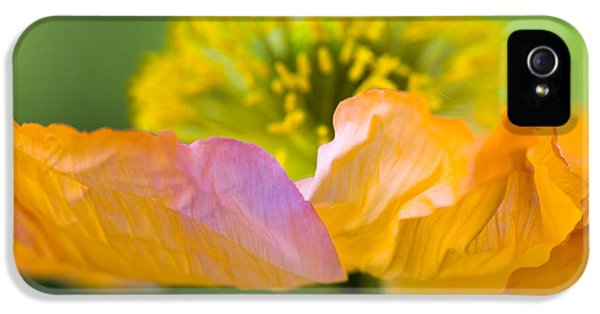 Tender iPhone 5 Cases - Iceland Poppy iPhone 5 Case by Silke Magino