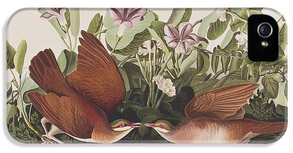 Key West Dove IPhone 5 / 5s Case by John James Audubon