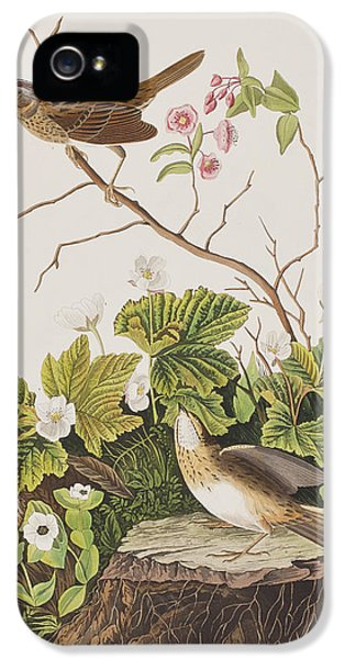 Lincoln Finch IPhone 5 / 5s Case by John James Audubon