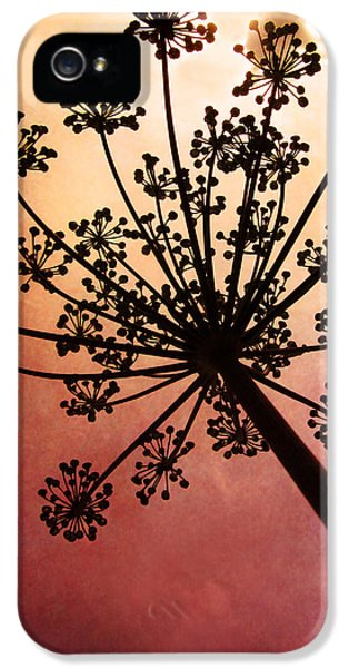 Firework iPhone 5 Cases - Natures Fireworks iPhone 5 Case by Amy Tyler