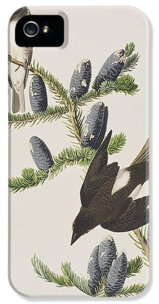 Olive Sided Flycatcher IPhone 5 / 5s Case by John James Audubon
