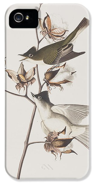 Pewit Flycatcher IPhone 5 / 5s Case by John James Audubon