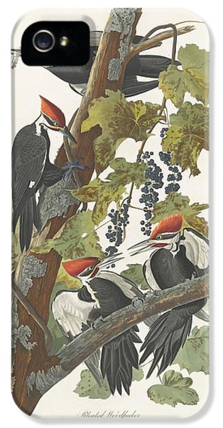 Pileated Woodpecker IPhone 5 / 5s Case by John James Audubon