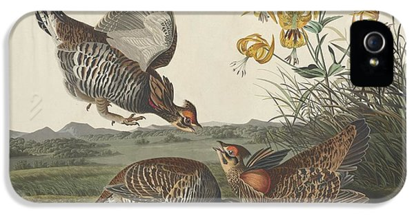 Pinnated Grouse IPhone 5 / 5s Case by John James Audubon