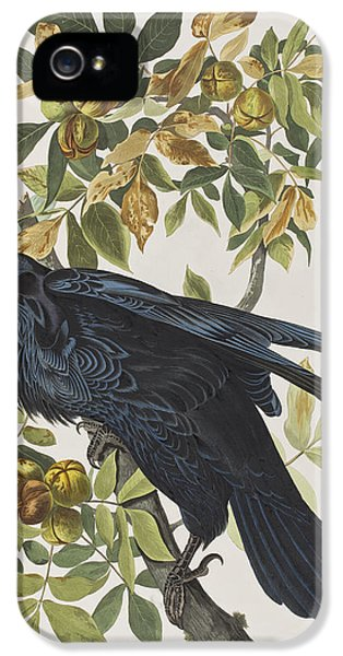 Raven IPhone 5 / 5s Case by John James Audubon