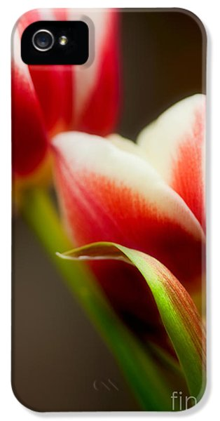 Tulips iPhone 5 Cases - Red and White Tulips iPhone 5 Case by Nailia Schwarz