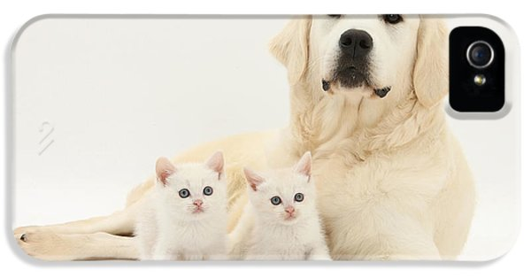 Canid iPhone 5 Cases - Retriever With Friendly Kittens iPhone 5 Case by Mark Taylor