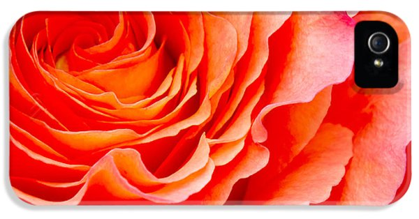 Roses iPhone 5 Cases - Rose iPhone 5 Case by Angela Doelling AD DESIGN Photo and PhotoArt
