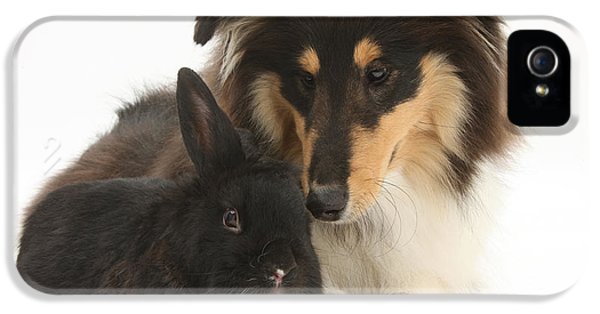 Canid iPhone 5 Cases - Rough Collie With Black Rabbit iPhone 5 Case by Mark Taylor