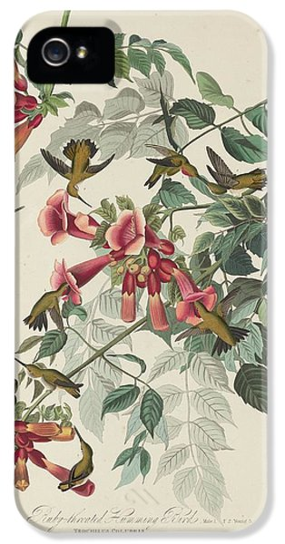 Ruby-throated Hummingbird IPhone 5 / 5s Case by John James Audubon