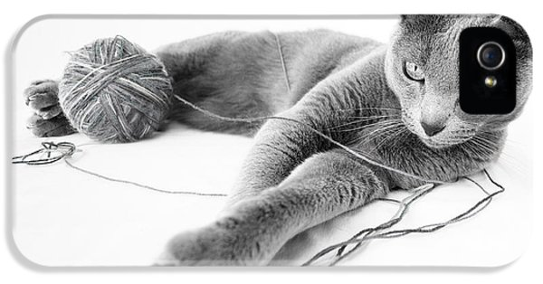 Playful iPhone 5 Cases - Russian Blue iPhone 5 Case by Nailia Schwarz