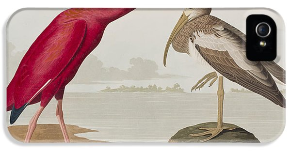 Scarlet Ibis IPhone 5 / 5s Case by John James Audubon
