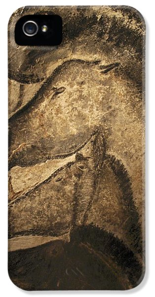 Ancient iPhone 5 Cases - Stone-age Cave Paintings, Chauvet, France iPhone 5 Case by Javier Truebamsf
