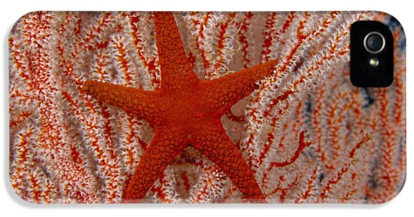 Polyp iPhone 5 Cases - Thailand, Marine Life iPhone 5 Case by Dave Fleetham - Printscapes