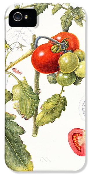 Tomatoes IPhone 5 / 5s Case by Margaret Ann Eden