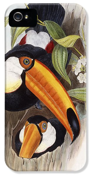 Toucan IPhone 5 / 5s Case by John Gould