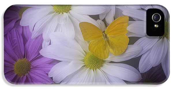 Softly iPhone 5 Cases - Yellow Butterfly resting iPhone 5 Case by Garry Gay