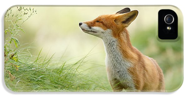 Smiling iPhone 5 Cases - Zen Fox iPhone 5 Case by Roeselien Raimond