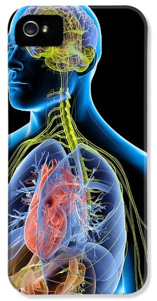 Organ iPhone 5 Cases - Human Male Anatomy, Artwork iPhone 5 Case by Pasieka