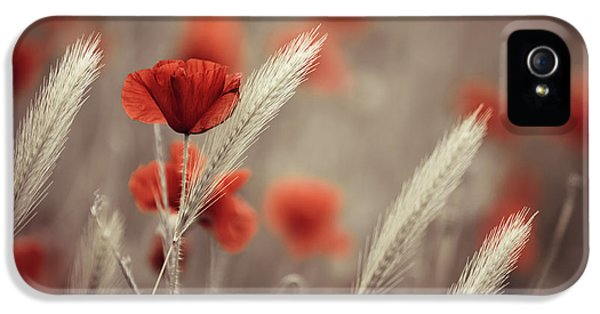 Summer Poppy Meadow IPhone 5 / 5s Case by Nailia Schwarz