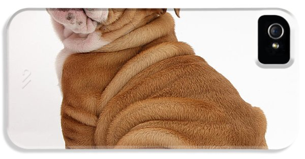 Canid iPhone 5 Cases - Bulldog Pup iPhone 5 Case by Mark Taylor