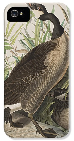 Canada Goose IPhone 5 / 5s Case by John James Audubon