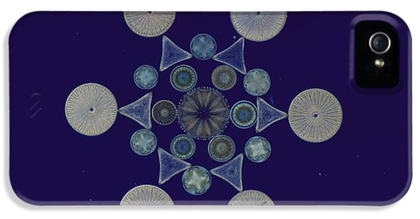 Phytoplankton iPhone 5 Cases - Diatom Arrangement iPhone 5 Case by M. I. Walker