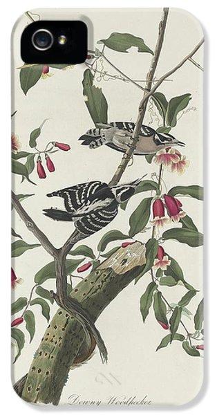 Downy Woodpecker IPhone 5 / 5s Case by John James Audubon