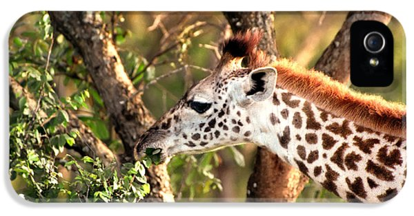 Giraffe IPhone 5 / 5s Case by Sebastian Musial