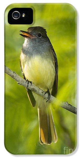Great Crested Flycatcher IPhone 5 / 5s Case by Anthony Mercieca