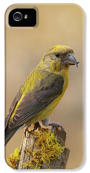 Red Crossbill IPhone 5 / 5s Case by Doug Herr