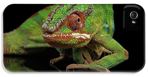 Sneaking Panther Chameleon, Reptile With Colorful Body On Black Mirror, Isolated Background IPhone 5 / 5s Case by Sergey Taran