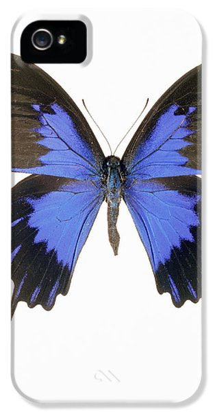 Swallowtail iPhone 5 Cases - Swallowtail Butterfly iPhone 5 Case by Lawrence Lawry