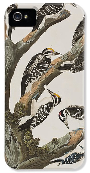 Woodpeckers IPhone 5 / 5s Case by John James Audubon