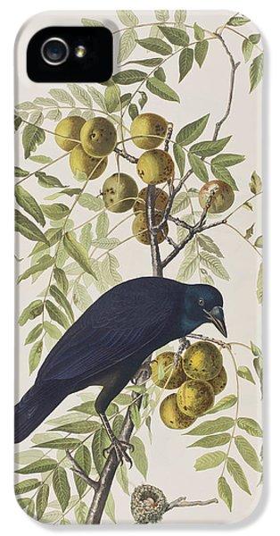 American Crow IPhone 5 / 5s Case by John James Audubon