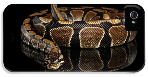 Ball Or Royal Python Snake On Isolated Black Background IPhone 5 / 5s Case by Sergey Taran
