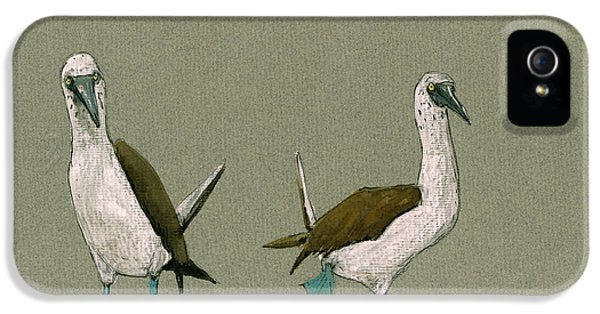 Blue Footed Boobies IPhone 5 / 5s Case by Juan  Bosco