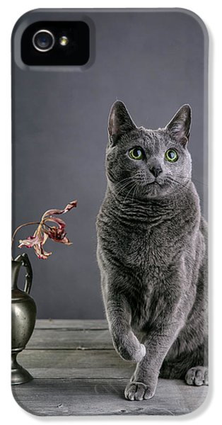 Play iPhone 5 Cases - Russian Blue Cat iPhone 5 Case by Nailia Schwarz