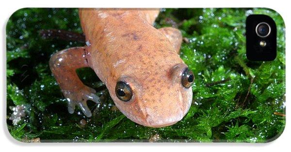 Spring Salamander IPhone 5 / 5s Case by Ted Kinsman