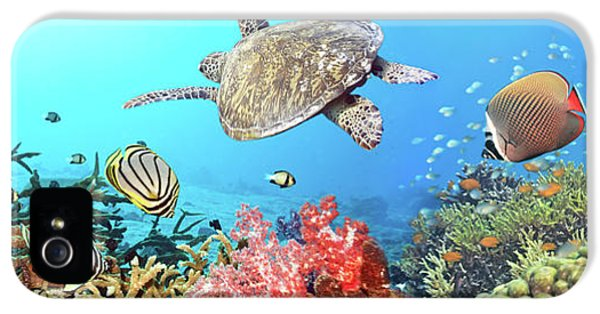 Redtail iPhone 5 Cases - Underwater panorama iPhone 5 Case by MotHaiBaPhoto Prints