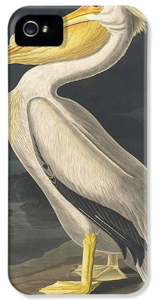 American White Pelican IPhone 5 / 5s Case by John James Audubon
