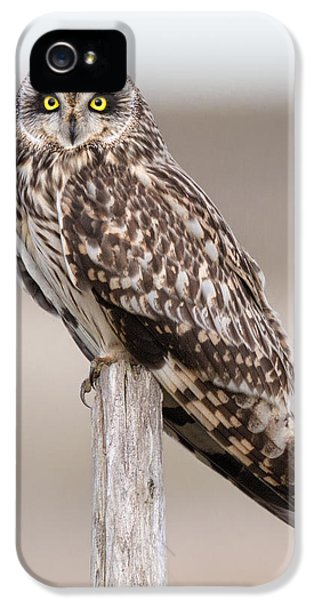 Short Eared Owl IPhone 5 / 5s Case by Ian Hufton