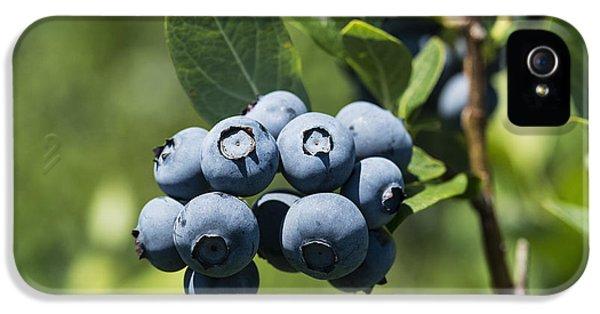Blueberry Bush IPhone 5 / 5s Case by John Greim