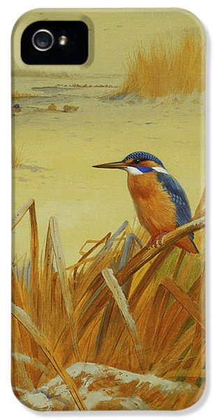 A Kingfisher Amongst Reeds In Winter IPhone 5 / 5s Case by Archibald Thorburn