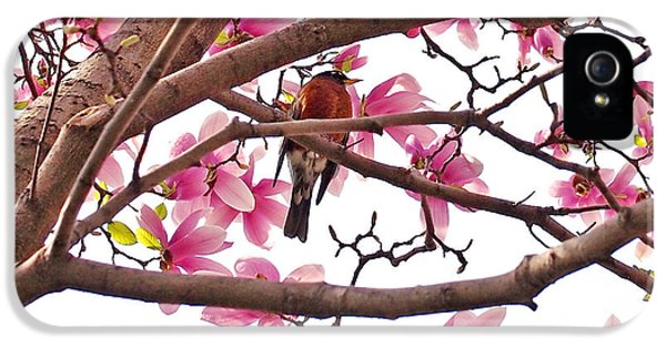 A Songbird In The Magnolia Tree - Square IPhone 5 / 5s Case by Rona Black