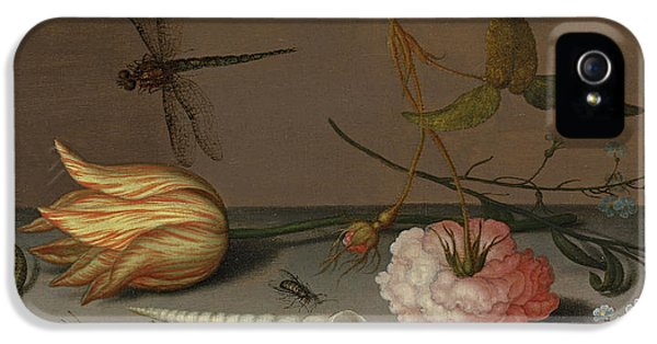 A Tulip, A Carnation, Spray Of Forget-me-nots, With A Shell, A Lizard And A Grasshopper, On A Ledge IPhone 5 / 5s Case by Balthasar van der Ast