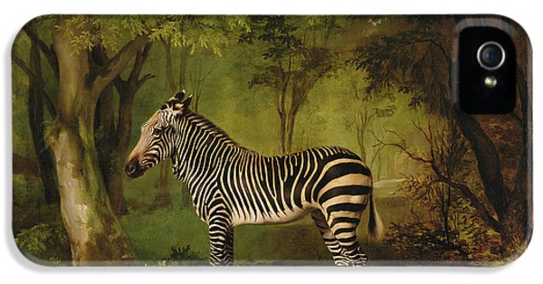 A Zebra IPhone 5 / 5s Case by George Stubbs
