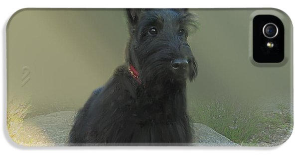 Scottie iPhone 5 Cases - Adorable Scottie on the Rocks Scottish Terrier   iPhone 5 Case by Heinz G Mielke