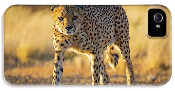 African Cheetah IPhone 5 / 5s Case by Inge Johnsson