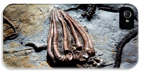National Museum Of America History iPhone 5 Cases - Alien Fossil   iPhone 5 Case by LeeAnn McLaneGoetz McLaneGoetzStudioLLCcom